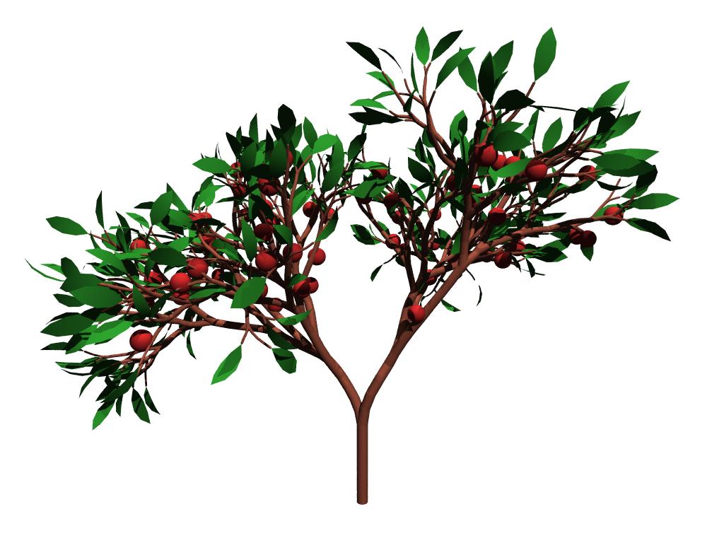 plant drawing